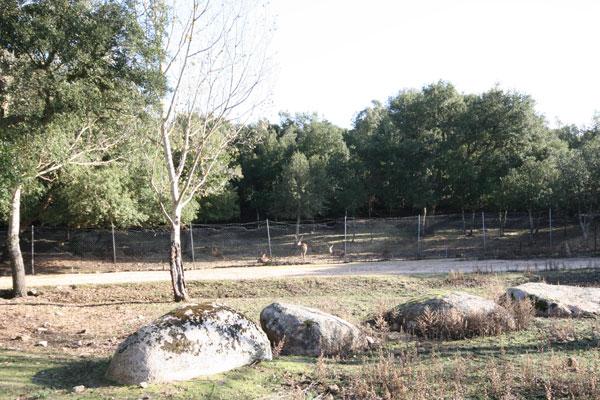 Parco Ente Foreste di Assai